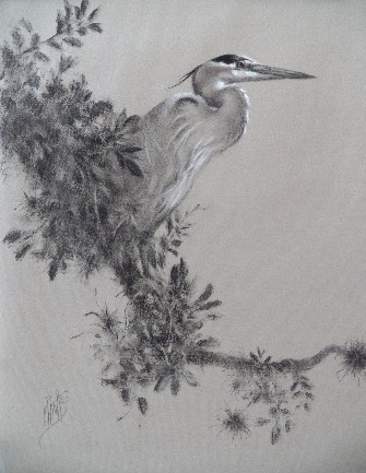 Great Blue Heron in Charcoal